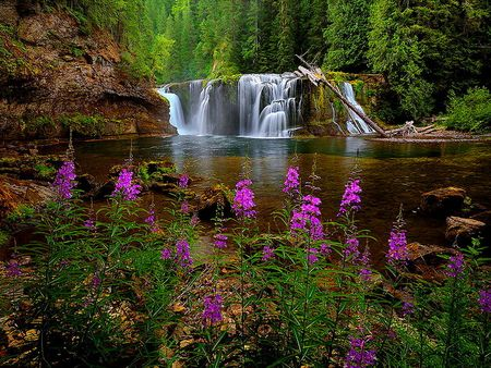 Forest fall flowers grass peaceful stream water pink