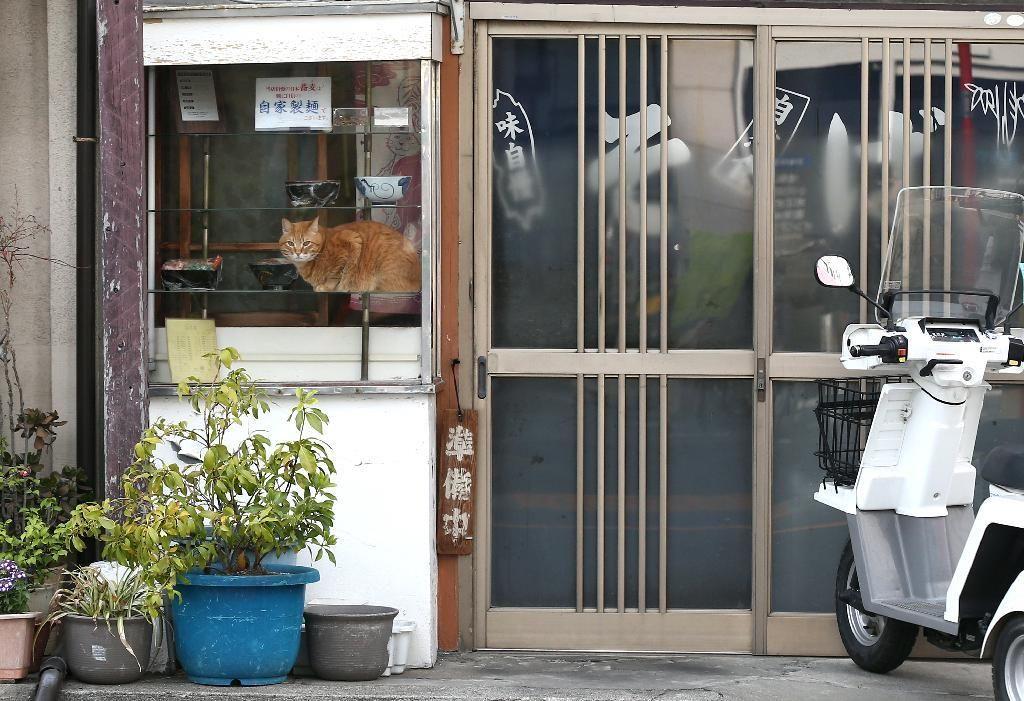 ショーケースでくつろぐ看板猫のピンク。お店の休憩時間限定の「至福の時」?=荒川区町屋(尾崎修二撮影)