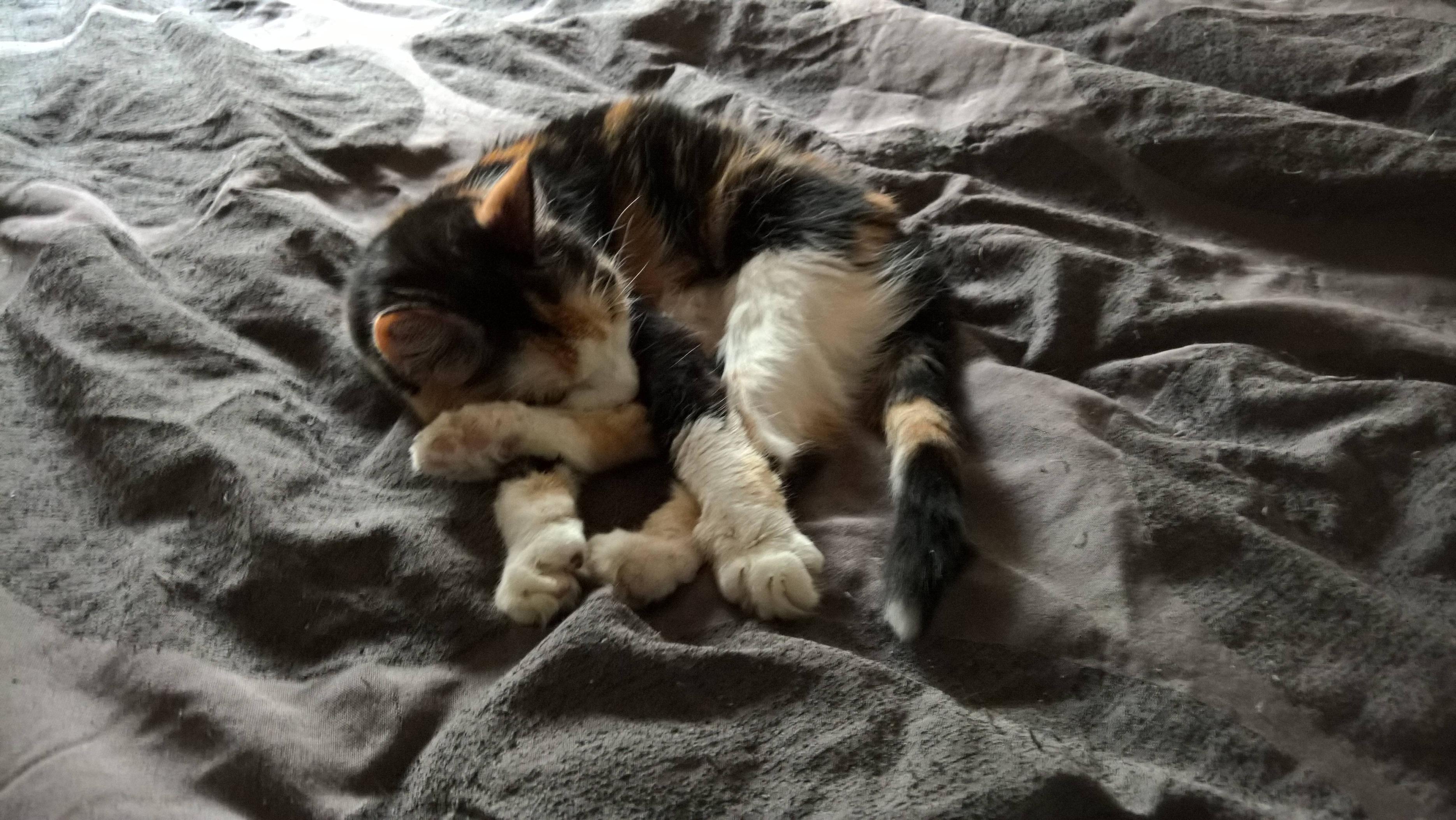 My 15 Year Old Kitten At Heart Startled Cat Kitten Cat Attack