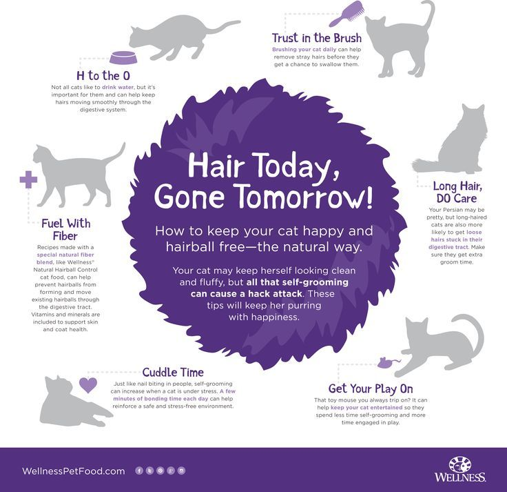 Helpful Hints For A Happy Cat Happy Cat Month Natural Pet Food