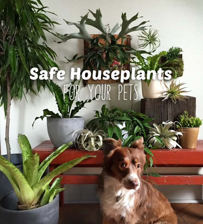 Plants And Pets Our 10 Favorite Pet Safe Indoor Plants And 7 To