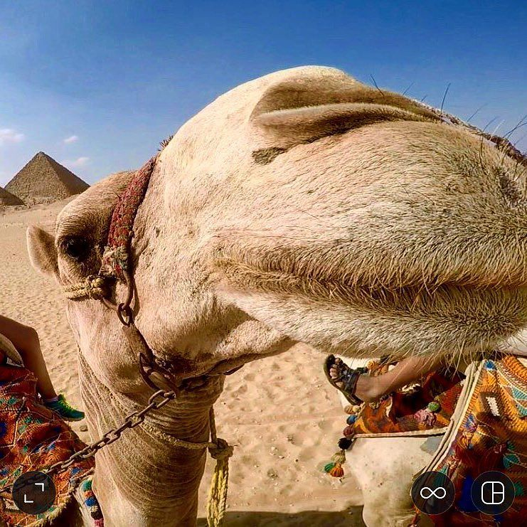 How cute is this guy? He was my ride around the pyramids!