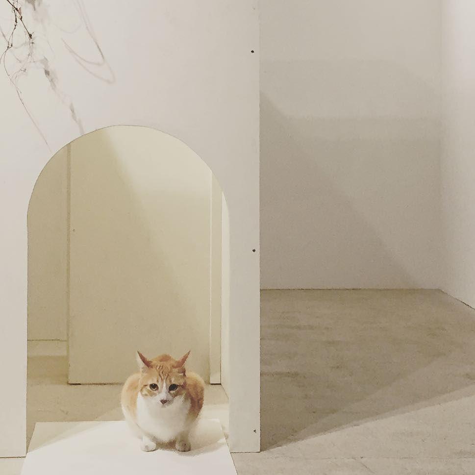 ここが入り口にゃみんな遊びにきてにゃ(ᴗ)و  少しずつ展示も公開 ぜひ猫の気持ちになって入ってみてください 入っているところの写真も良ければ撮りますよー こむぎといつまでも出版記念写真展は日曜日までですお待ちしております(ٮ) #こむぎといつまでも  #こむぎといつまでも出版記念写真展  #コムギバコ #こむぎねこ写真展 by tomochunba