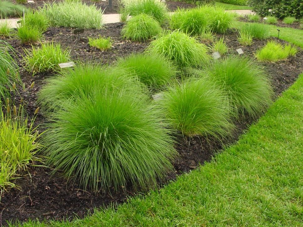 Types Of Ornamental Grasses Grasses Landscaping Grasses Garden