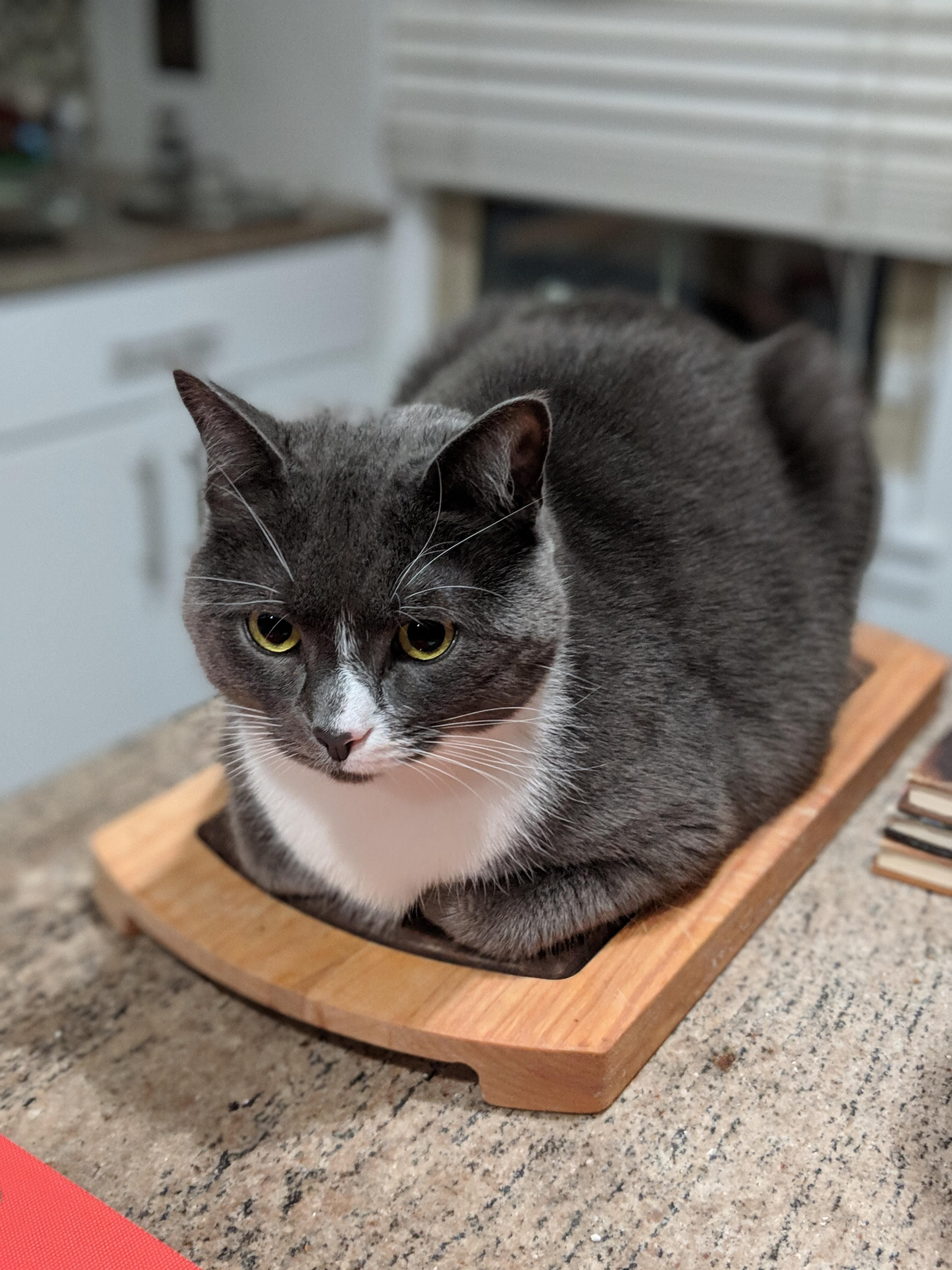 Our cat thinks he's a loaf of bread (With images) Cats