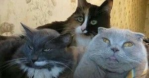 15 Cat Pics That Will Always Make You Laugh