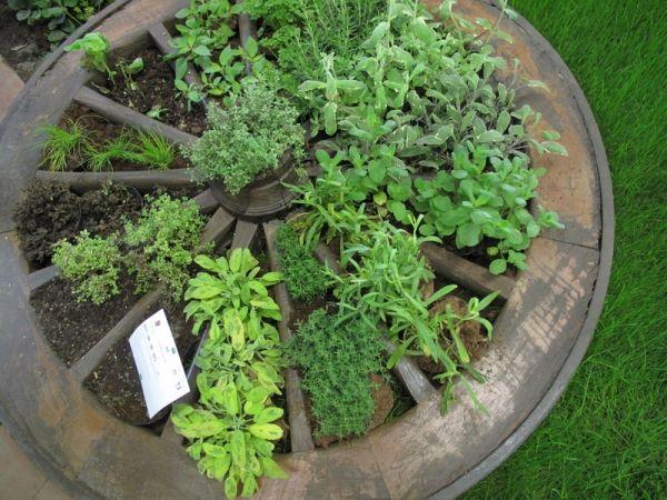 Aromatiques dans une roue de charette | Idées jardin | Pinterest ...
