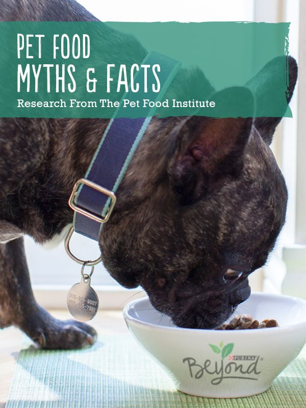 What S The Reality Of Homemade Vs Store Bought When It Comes To A Healthy Cat Food Or Dog Food See What The Pet Best Dog Food Brands Canine Care Food Animals