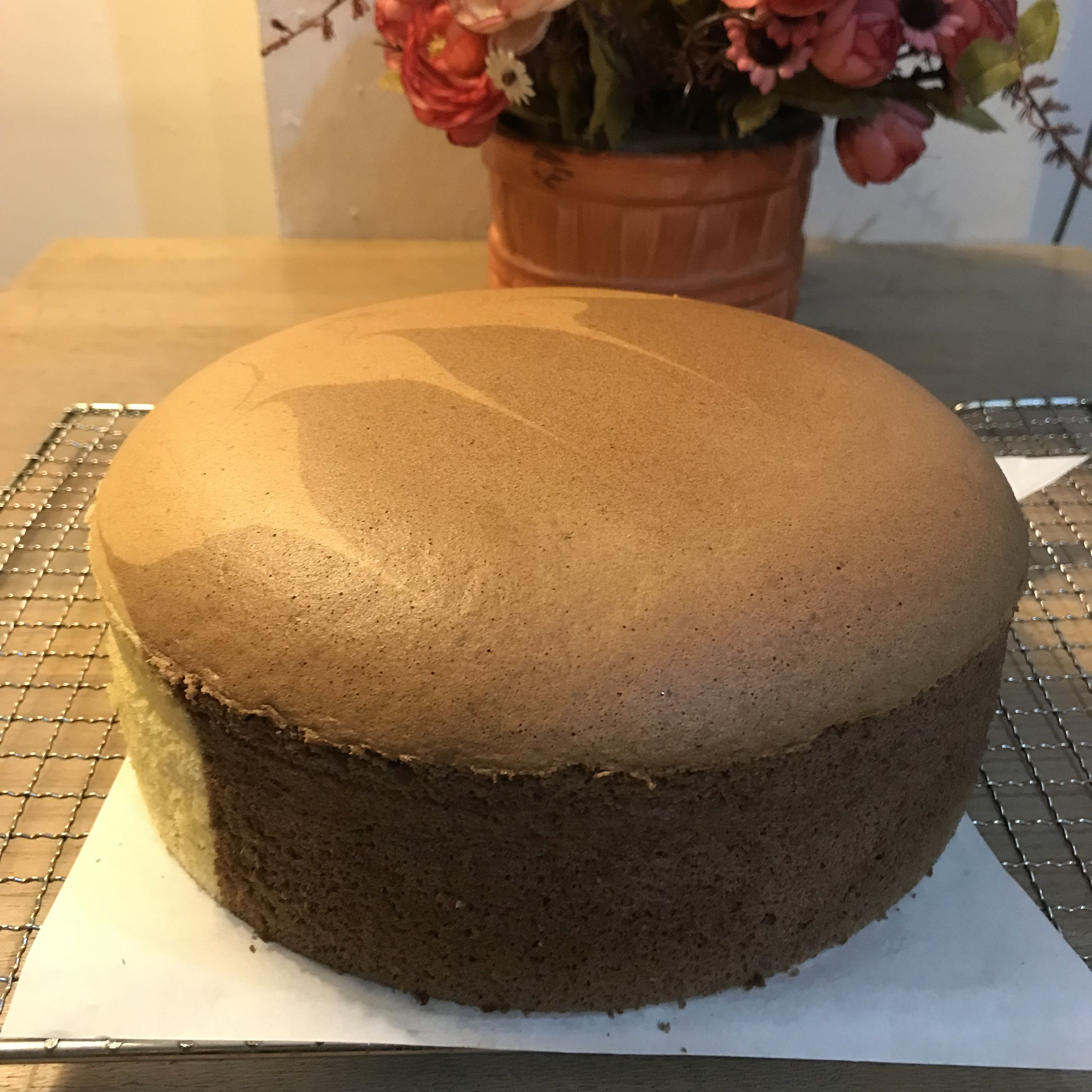 Nuttella Cake Sponge Cake Chocolate Sponge Cake
