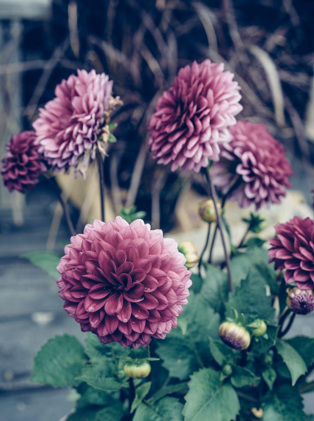 Flowers by Katrin Bååth - Lovely Life