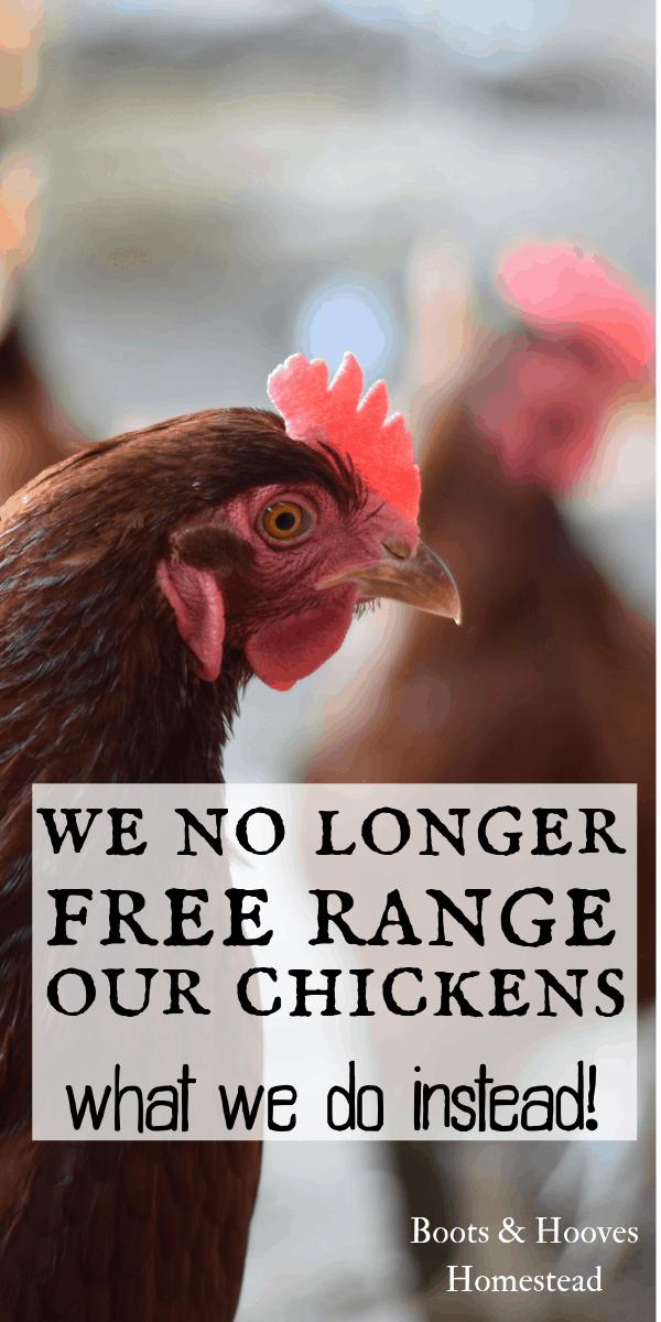 Why We No Longer Free Range Chickens   Raising backyard ...