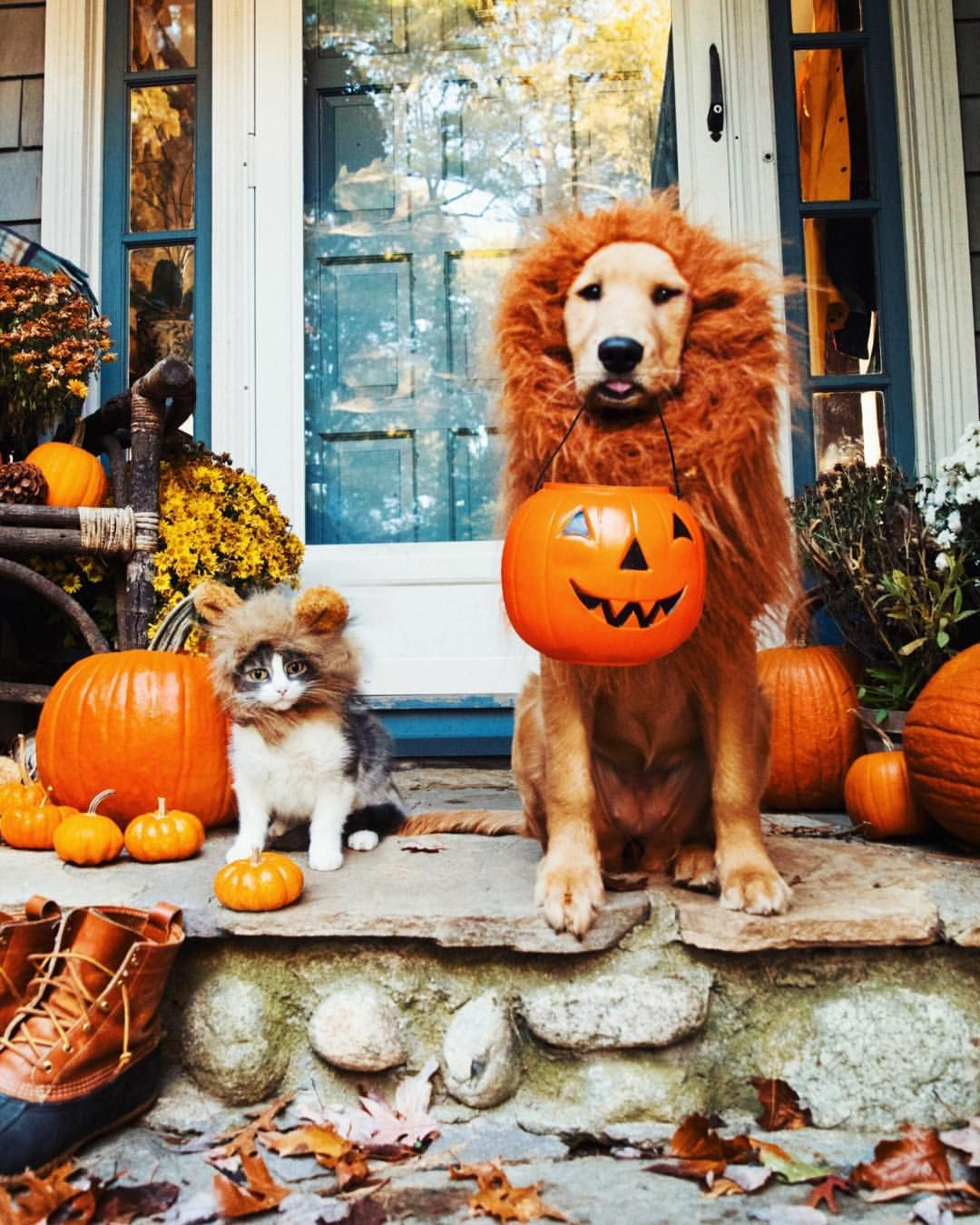 Pin by Southern Girl on Halloween Halloween animals