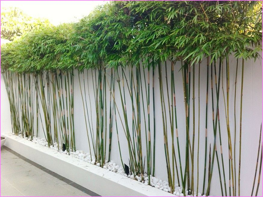 Outdoor bamboo plants decor pinterest bamboo plants Bamboo screens for outdoors