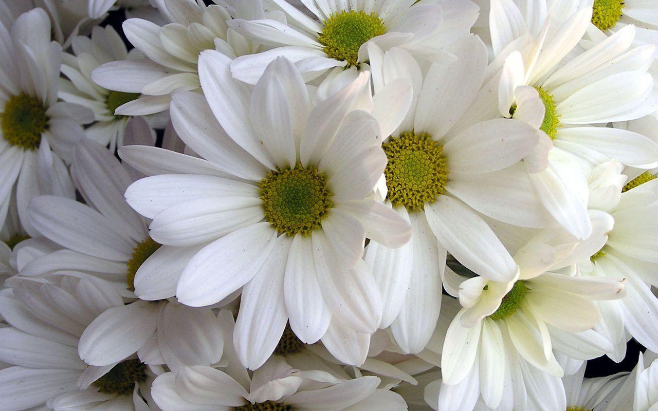 Wallpaper download pinterest - Flower Hd Wallpaper Free Download