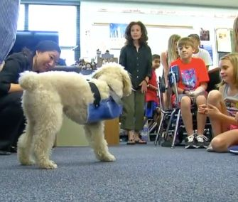 Engineering Students Create Prosthetic Leg For Puppy Mill Survivor Engineering Student Student Created Puppy Mills