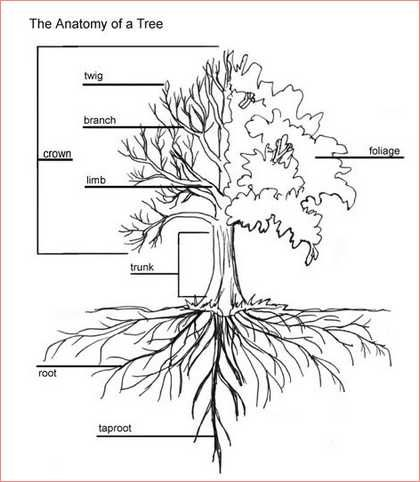Tree Root System Calculation
