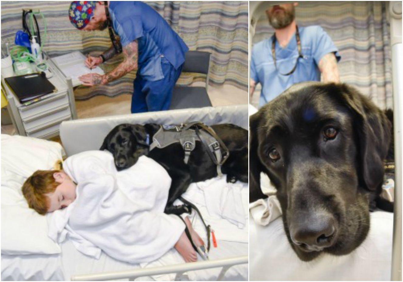 Este é Mahe, o cão que não abandona seu dono - nem na cama do hospital