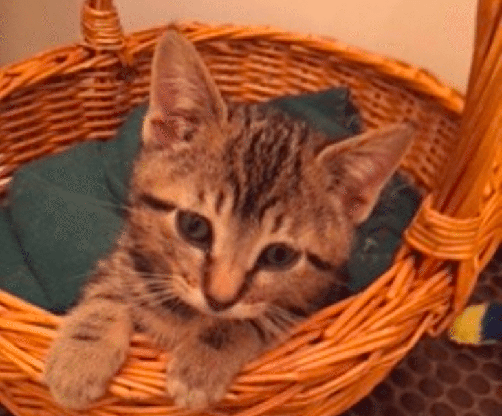 Adoptable Animal Of The Week Macaroon The Kitten With Images