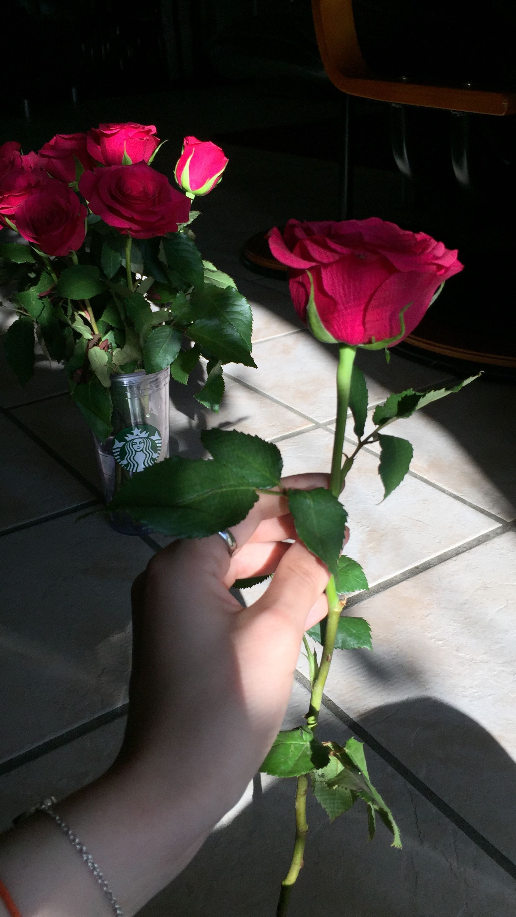 Pin By S S D On Dpz Beautiful Roses Flower Aesthetic Flower Beauty