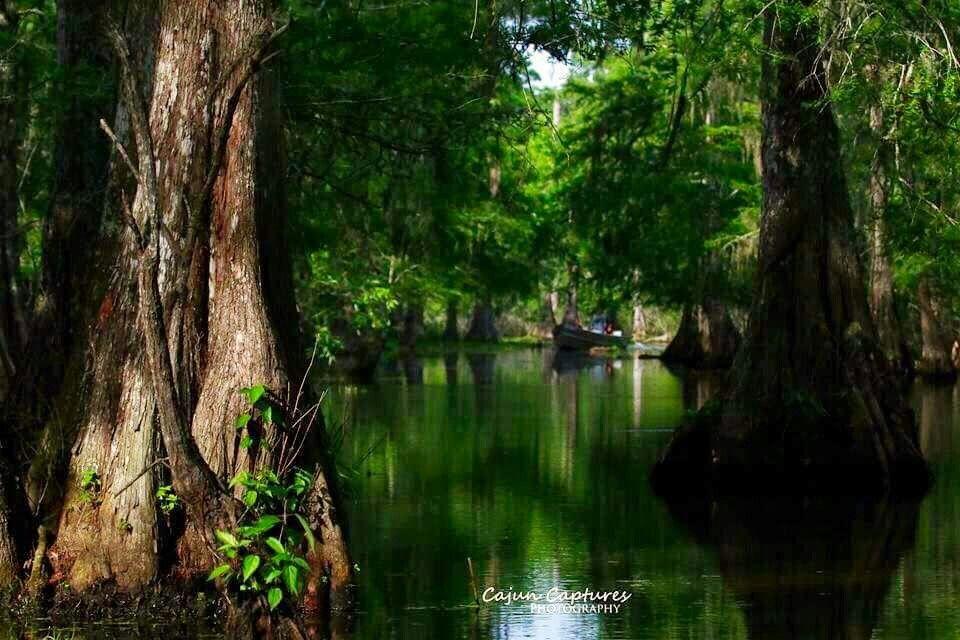 Park Art|My WordPress Blog_Ryans Tree Service Baton Rouge