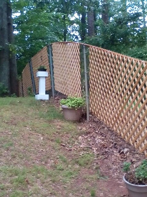 Easy And Cheap Chain Link Fence Covered With Trellis