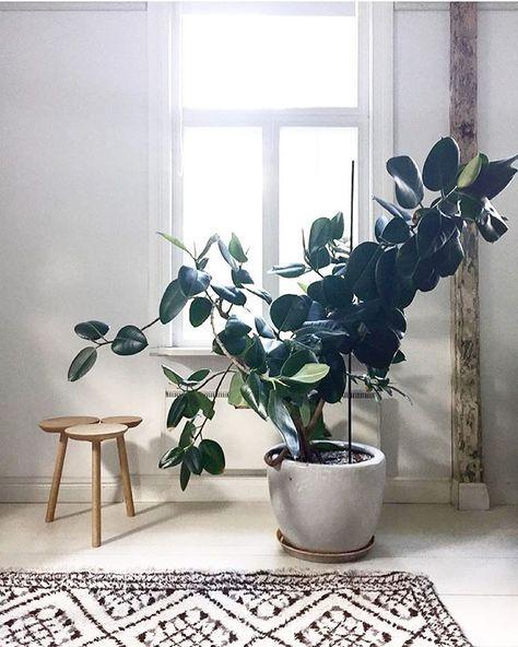 10 plantes d int rieur faciles d 39 entretien et quasi intuables. Black Bedroom Furniture Sets. Home Design Ideas
