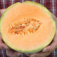 Growing Melons from Seeds - How to Plant and Grow Melon Seeds - West Coast Seeds