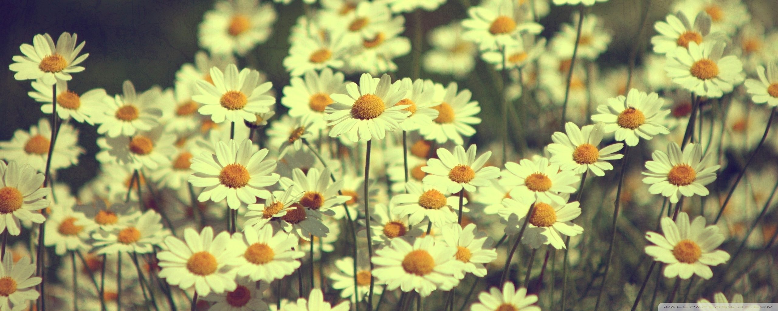 vintage sunflower wallpaper desktop ~ sdeerwallpaper | hihi