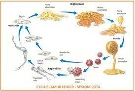 Pendidikan 3 Tahapan Dalam Siklus Hidup Dari Ular Siklus Hidup