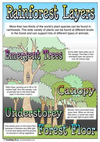 Rainforest Layers Rainforest Activities Rainforest Classroom