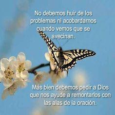Ver Reflexiones De Renuevo De Plenitud Jesus The Christ Dios