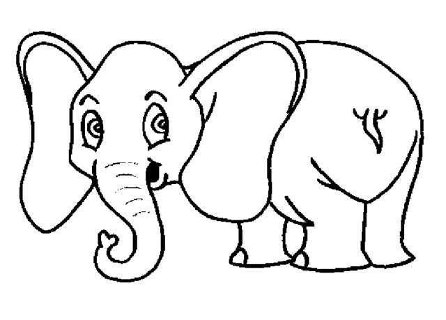 Dibujos De Animales Para Colorear Elefante Animales Salvajes