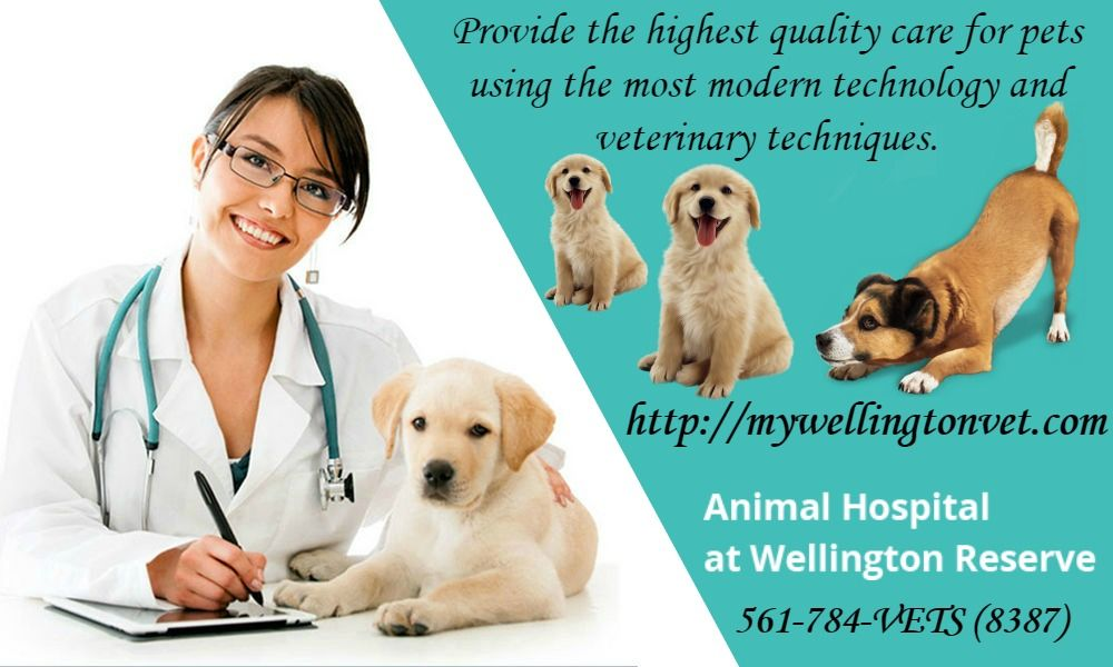 Dog Care Grooming Hospital In Wellington With Images Animal Hospital Dog Care Pet Clinic