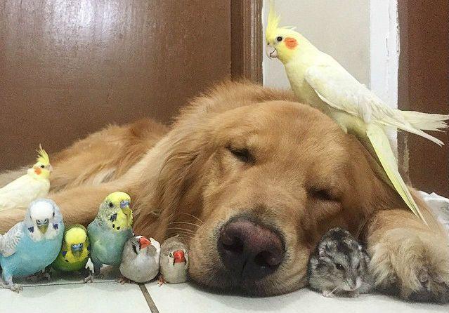 Amizade improvável: um cachorro, um hamster e oito pássaros – PetCidade.com.br