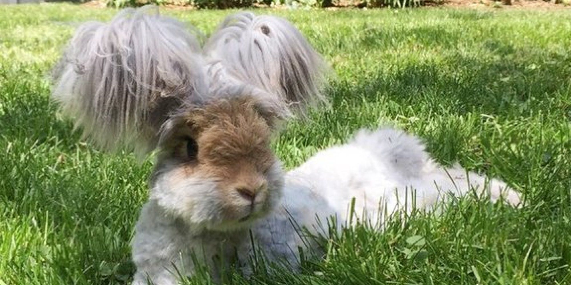 Wally The Angora Bunny Is Your Ultimate Summer Hairspiration   The Huffington Post