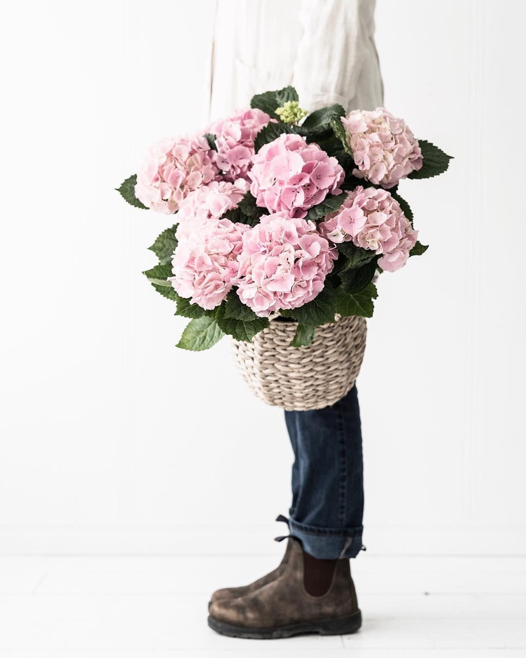 Pin by michelle on bloom Bloom, Pink hydrangea, Flowers