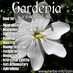 Gardenia Essential Oil Uses Gardenia Essential Oil Gardenia