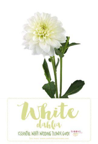 Essential white wedding flower guide names types pics types of white flowers white dahlia click here for 20 white wedding flowers httpconfettidaydreamstypes of white wedding flowers names mightylinksfo