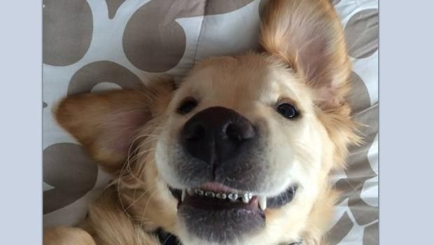 Michigan Puppy With Braces Is All Smiles Dog With Braces Dog