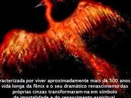 Resultado De Imagem Para Fenix Renascendo Das Cinzas Frases Tatoo