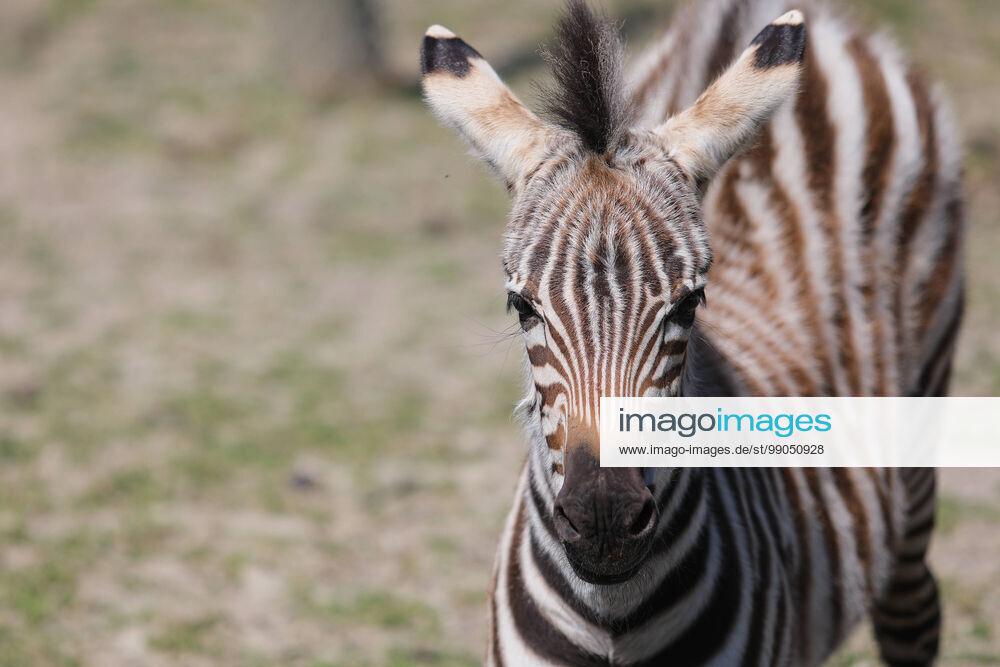 Beeindruckende Tierbilder Imago Images In 2020 Tierbilder Bilder Sport Bild