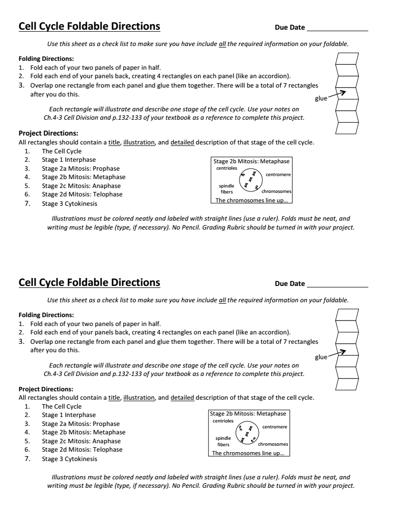 Cell Cycle Foldable Directions Cell cycle, Teaching