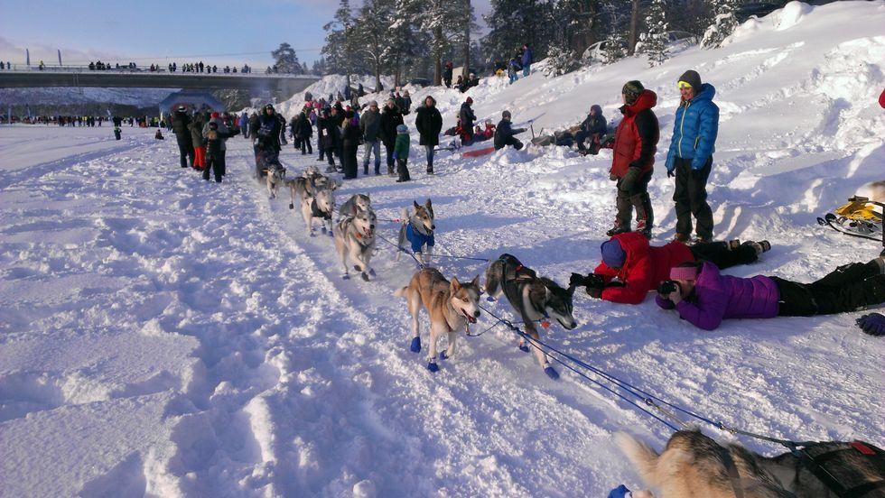 Finnmarksløpet 2013