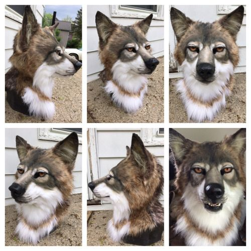 The Head Of A Realistic Wolf Fursuit For Lion Witch Realistic Wolf