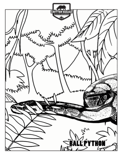 Ball Python Coloring Page C S W D Coloring Pages Ball Python Free Coloring Pages