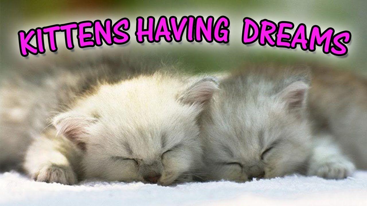 Baby Kittens Having A Bad Dream Baby Kittens Kittens Cutest Cute Kitten Gif