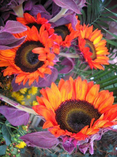 Saw At A Florists Shop Purple Petals Bright Orange Sunflowers Though I Know There Are Orange Sunflowers I Ve Neve Orange Sunflowers Sunflower Florist Shop