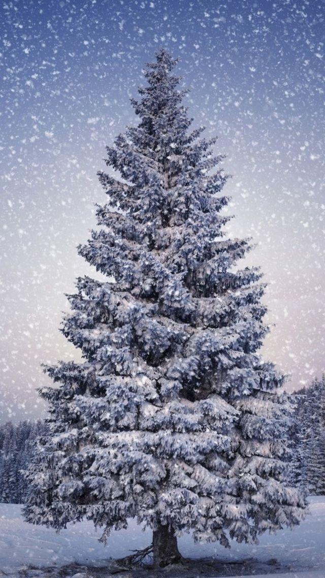 Fir Trees Snowfall Winter Iphone 5s Wallpaper Download