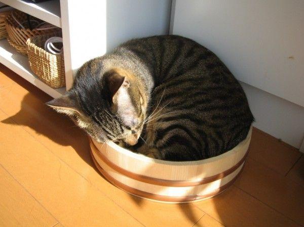 猫と桶の相性の良さは異常 « 猫ジャーナル