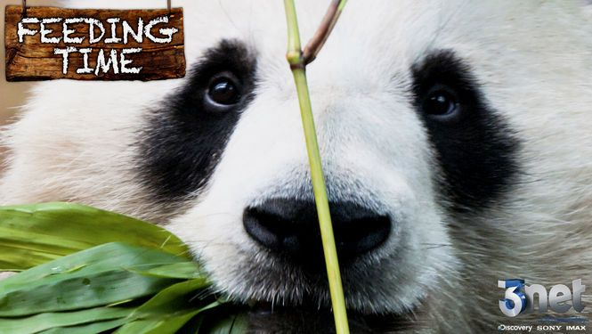Feeding Time Great series about how animals are taken of